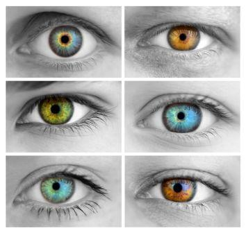 17730844 - set of 6 colorful different open eyes / huge size / macro