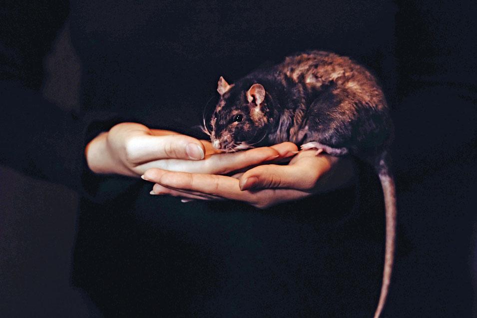 HET JAAR VAN DE RAT